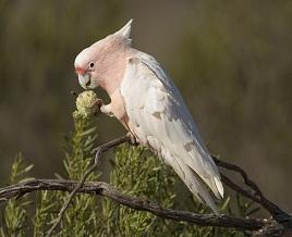 Bird Vet Parrot Diet