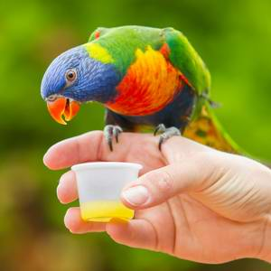 Vet for my Lorikeet