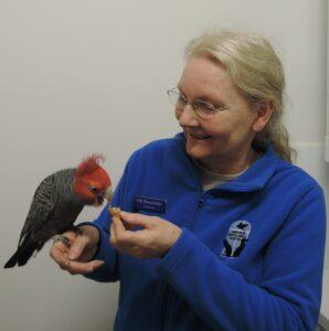 Dr Pat Macwhirter Bird Vet Specialist
