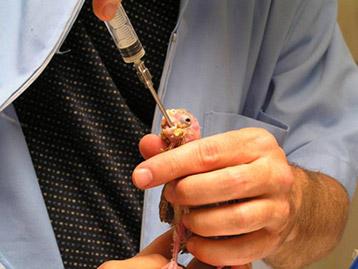 Avian Veterinary Specialist