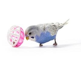 Parrot Enrichment Toys Melbourne
