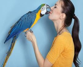 Avian bird Behavior training
