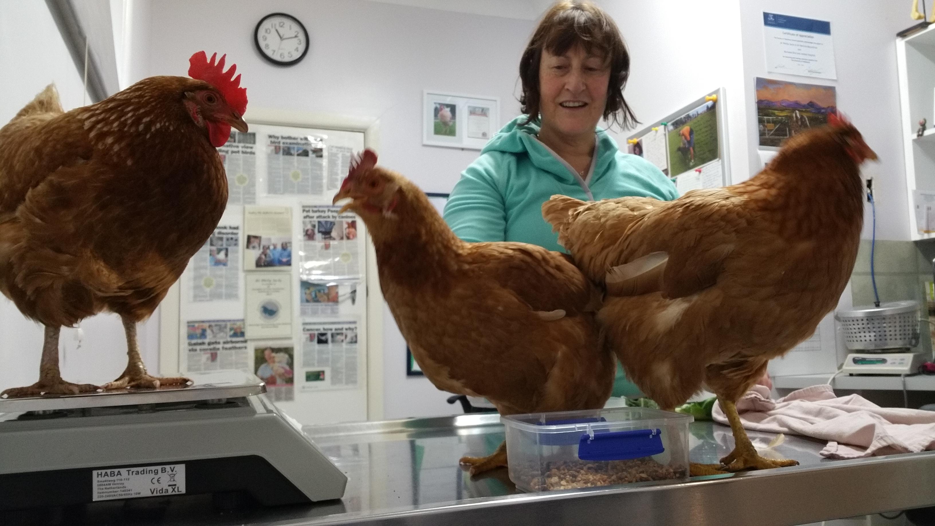 poultry vet near me
