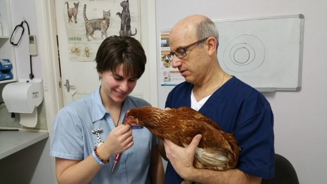 chicken vet near me